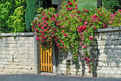 The gate with a rose bush. The gate with a blooming rose bush Royalty Free Stock Photos