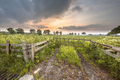 Gate to meadow covered in Cow Parsley flower Stock Image