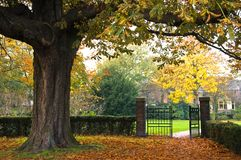 Gate to the park in autumn. With tree and fallen leaves Royalty Free Stock Image