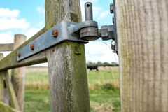 Detailed view of a timber farm gate entrance, showing a distant cow on a meadow. royalty free stock photos