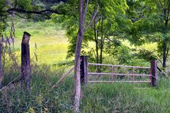 Gate In The Woods. Old farm gate off the road royalty free stock photos