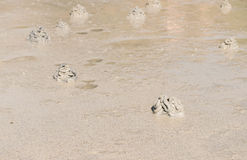 Gatenkrab op het strand Royalty-vrije Stock Fotografie