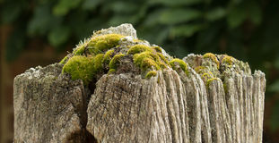 Gatepost with Moss Stock Photos