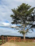 Gates By Tree. Gateway by a great pine tree Stock Image
