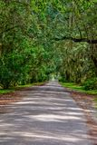 Gateway Oaks royalty free stock photography