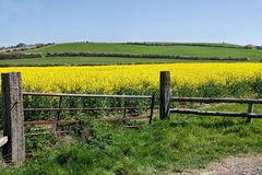 Gateway To Fields Of Gold Royalty Free Stock Photography