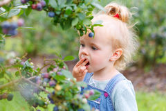 Gather blueberries. Little girl gathering blueberries outdoors stock image