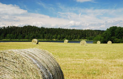Gathered field with straw bales Royalty Free Stock Images