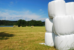 Gathered field with straw bales packaged Stock Photo