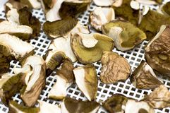 Gathered mushrooms boleti and bay boletes Royalty Free Stock Photo