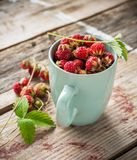 Gathered wild strawberries in a ceramic cup mint Royalty Free Stock Photography