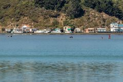 Gatherers οστρακόδερμων στον κολπίσκο Pauatahanui, Mana, Νέα Ζηλανδία στοκ εικόνες