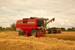 Gathering the barley crop. Royalty Free Stock Photos