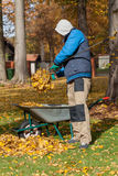 Gathering into borrow. A man gathering autumn leaves into a borrow royalty free stock photography