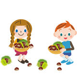 Gathering chestnuts, Stock Photo