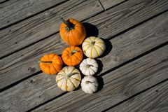 Pumpkin Patch. Gathering the cutest pumpkins from the patch just another day to celebrate Royalty Free Stock Photos