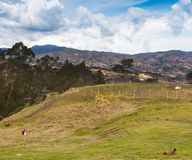 Gathering Grasses at Ingapirca, Ecuador Royalty Free Stock Photo