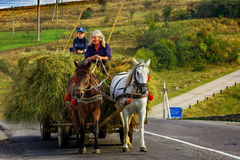 Gathering hay in the Carpathian mountains Royalty Free Stock Image