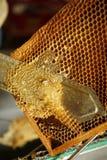 Gathering honey Royalty Free Stock Images