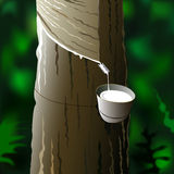 Gathering latex. Illustration of a rubber tree with a vessel and tap for gathering latex Stock Photography