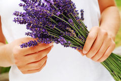 Gathering Lavender Stock Images