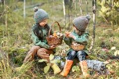 Gathering of mushrooms. Stock Photos