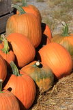 Gathering of pumpkins set on hay at farmers market Stock Photography