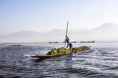 Gathering seaweeds from th lake Stock Image