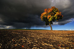 The Gathering Storm of autumn maple. Landscape Stock Photo