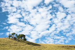 Gathering of trees amid a hilltop against Stock Photo