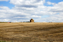 Gathering the wheat harvest. Agricultural field where crops harvested cereals, wheat Royalty Free Stock Photo