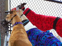 gathervinthundar tillsammans fotografering för bildbyråer
