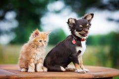Gatinho adorável e cachorrinho que sentam-se junto Imagens de Stock