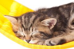 Gatinho adormecido Foto de Stock Royalty Free