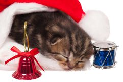 Gatinho adormecido Fotos de Stock Royalty Free