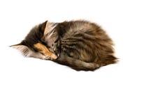 Gatinho adormecido em uma esfera imagem de stock