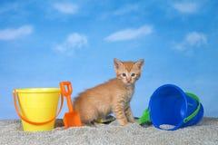 Gatinho alaranjado do gato malhado na areia com as cubetas na praia fotografia de stock