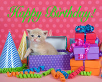 Gatinho amarelo da laranja na caixa do aniversário com presentes e chapéus do partido imagem de stock