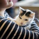 Gatinho amedrontado nas mãos do voluntário da menina, no abrigo para animais desabrigados O gatinho terá home, gato das tomadas d fotos de stock royalty free