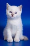 Gatinho bonito Fotografia de Stock Royalty Free