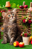 Gatinho bonito Fotos de Stock Royalty Free
