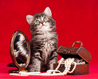 Gatinho bonito Imagens de Stock Royalty Free