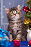 Gatinho bonito Foto de Stock