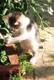 Gatinho bonito Fotografia de Stock