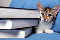 Gatinho bonito com livros Fotos de Stock Royalty Free