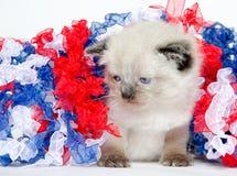 Gatinho bonito com quarto de decorações de julho Fotografia de Stock