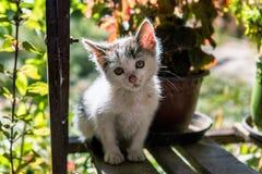 Gatinho bonito da rua em um abrigo animal local imagens de stock