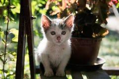 Gatinho bonito da rua em um abrigo animal local fotos de stock royalty free