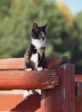 Gatinho bonito da três-cor Foto de Stock Royalty Free