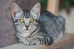 Gatinho bonito do gato malhado imagens de stock royalty free